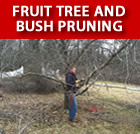 Fruit Tree and Bush Pruning